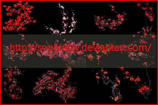 PNG plum blossom flowers stock