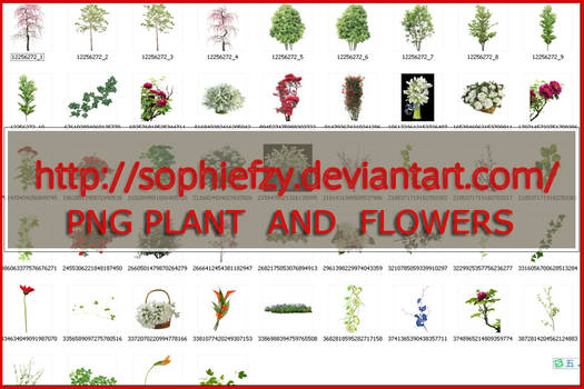 PNG PLANT AND FLOWERS