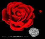 rose stock
