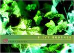 Ivy Brushes