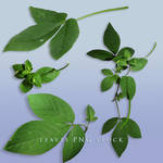 Leaves png stock