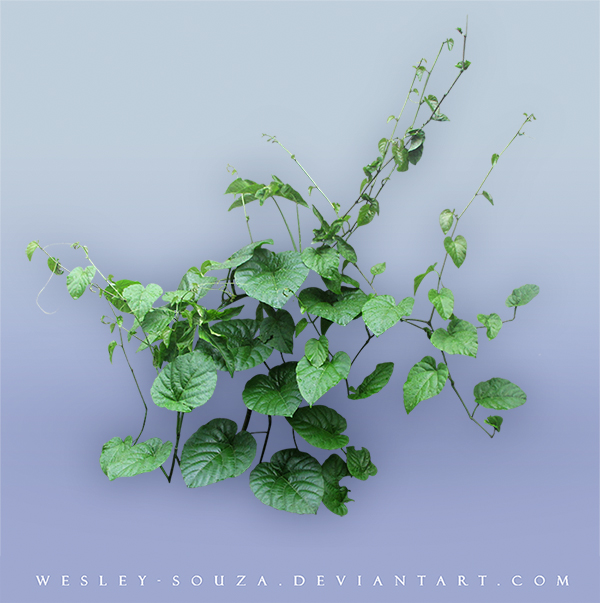 Plant PNG stock by Wesley-Souza