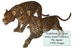 TW3D Two Jaguars