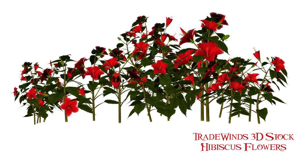 TW3D Hibiscus Flowers by TW3DSTOCK