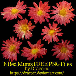 8 Red Mums FREE PNG Files by Dracorn
