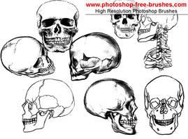 Skull Brushes by VELAVAN