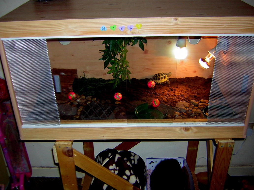 & Tortoises and Vivariums by TestudoTorty on DeviantArt pezcame.com