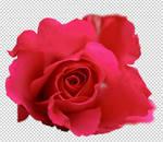 Rose PSD II
