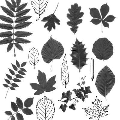 Leaf Photoshop brushes by melemel