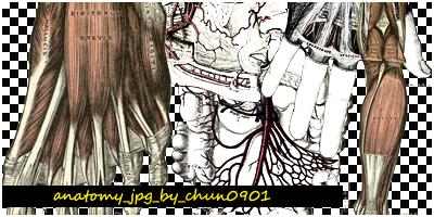 anatomy_jpg by chun0901