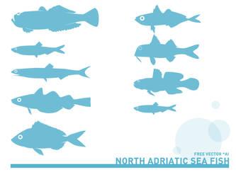 Adriatic sea fish by Brdamante5056