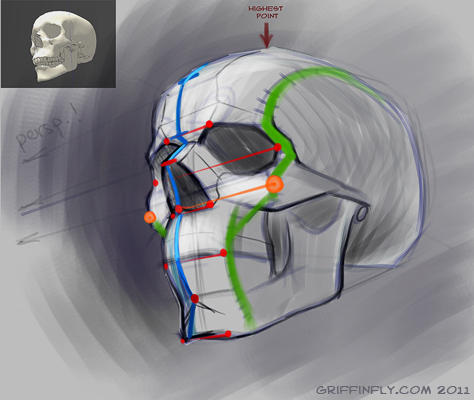 human skull - sketch tutorial by Griffinfly