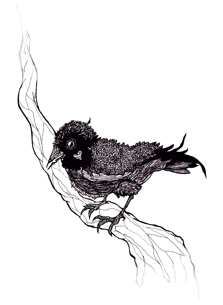 Blackbird by AsheWednesday