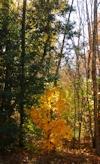 Dark Forest by Amanda-Graham