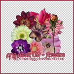 PNG PACK 09 - FLOWERS