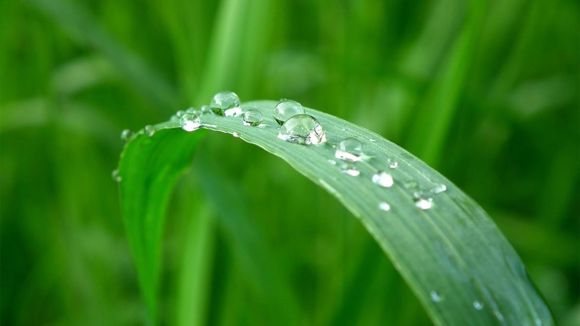 Grass and Raindrops no. 3 by dariuszwozniak