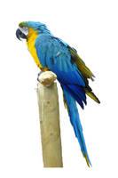 Parrot psd by GRANNYSATTICSTOCK
