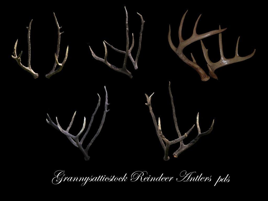 Reindeer Antlers psd by GRANNYSATTICSTOCK