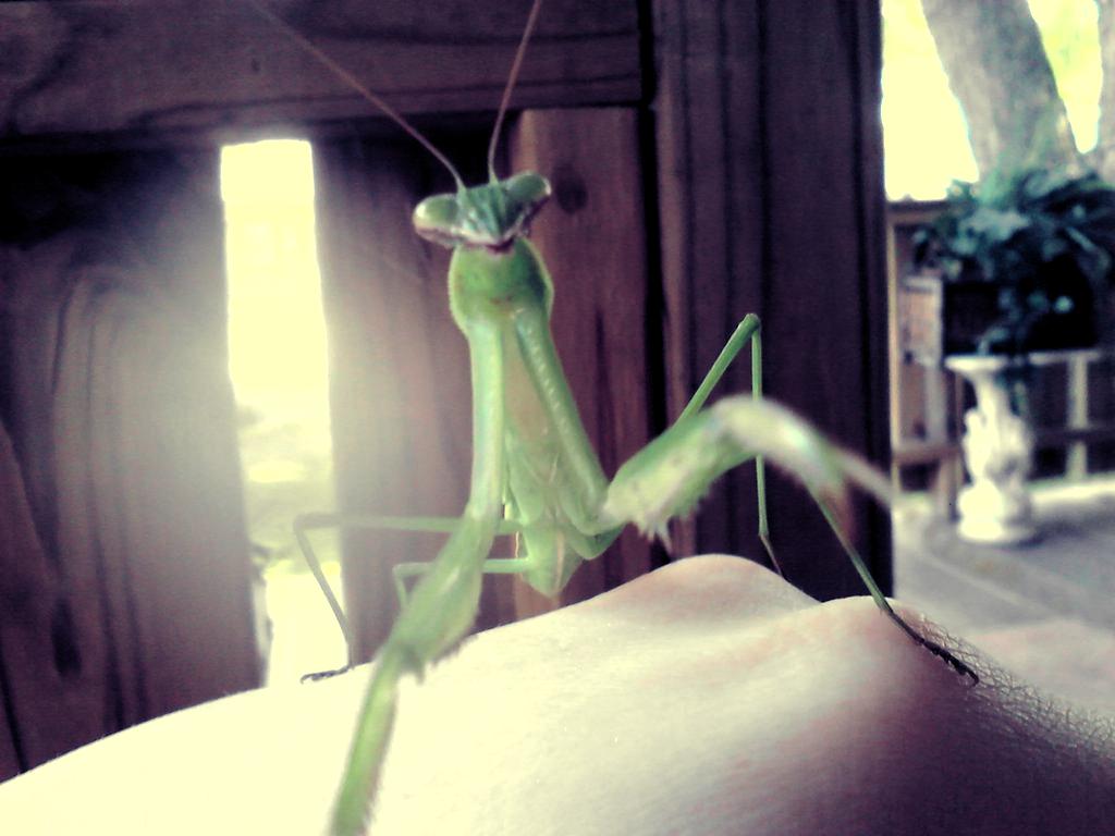 Alien by ThisPoisonedOne