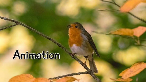 Singing Robin (Animation)