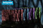 Free Dark Trees Background
