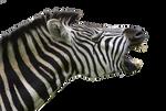 Zebra TF Animation