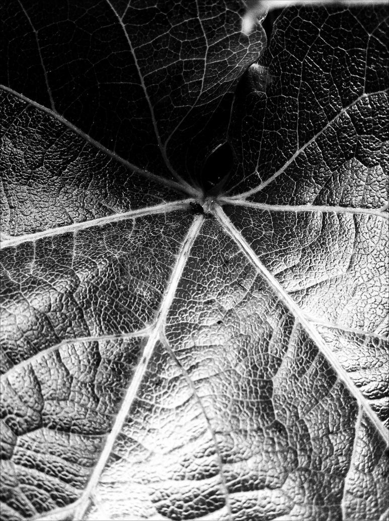 Black Leaf by alexkaessner