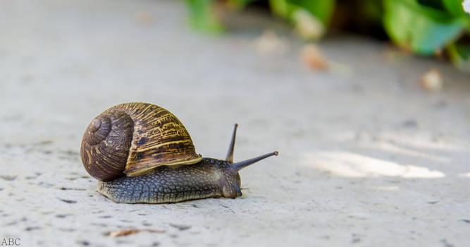Sidewalk Snail