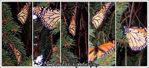 Monarch Pack- 6 photos