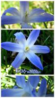flora 6- Blue flower pack