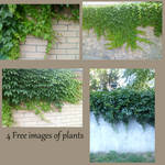 4 Free images of plants