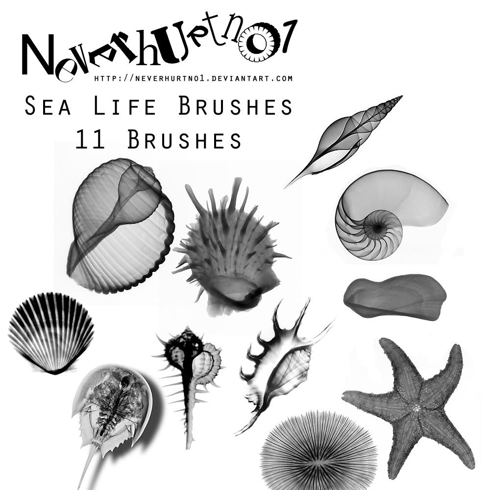 Sea Life Brushes
