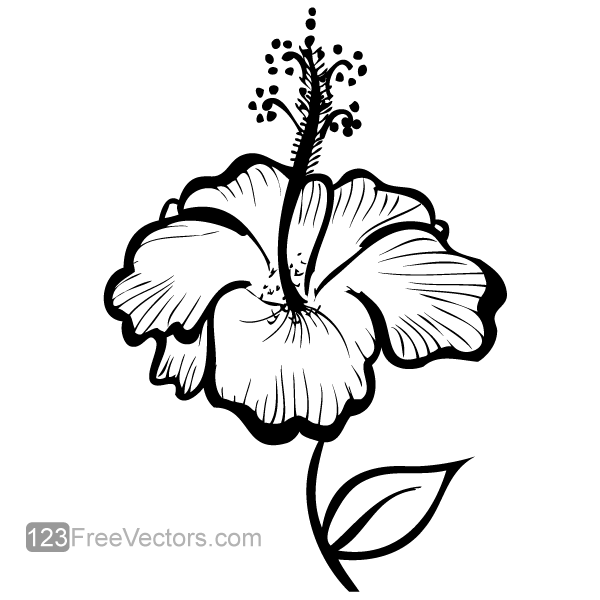 Line Drawing Flower Vector : Hand drawn hibiscus flower vector by freevectors on