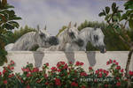 ARABIAN MARES by robybaer