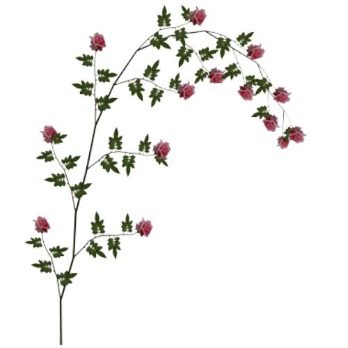 Pink Rose Vine 1