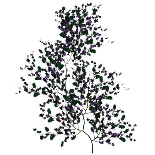 Purple Vine 1 by TexelGirl-Stock