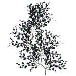 Purple Vine 1