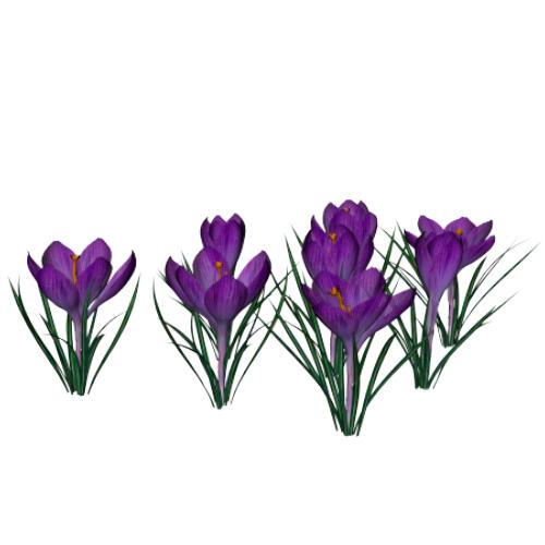 Purple Crocus By Texelgirl Stock On Deviantart