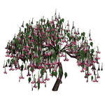 Datura Tree 1