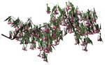 Pink Datura Branch