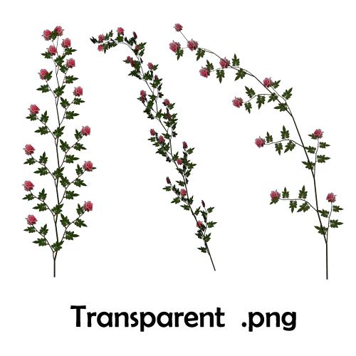 Pink Rose Vines