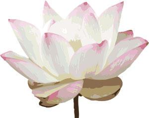 Illustrated Lotus Blossom