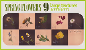 Spring flowers texture pack by MotyPhoto