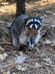 (CLICK ME, I MOVE) 30 MIN WITH THIS RACCOON