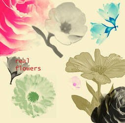 Real Flowers Brushes Upgraded by tahtasiz