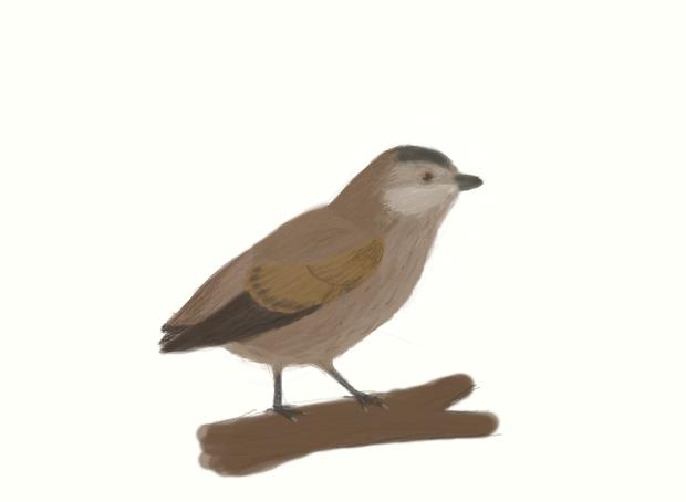 Sinornis santensis by casielles
