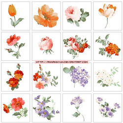 Collection flower