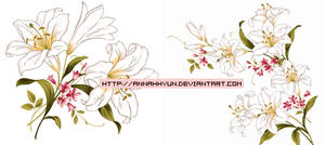 Collection flower02
