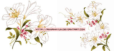 Collection flower02 by annahhyun
