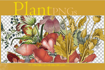 PNG Plant ..